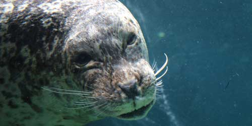 Harbor Seal Roger Williams Park Zoo Providence Rhode Island