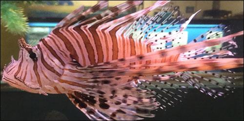 Sea Creatures Aquarium North Providence Rhode Island