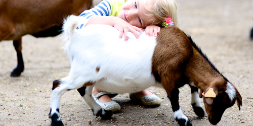 Girl & Baby Goat - Roger Williams Park Zoo - Providence, RI
