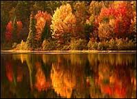 Beautiful Fall Foliage In Rhode Island